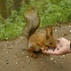 Beautiful squirrel eats sunflower seeds from a hand of man - PhotoDune Item for Sale