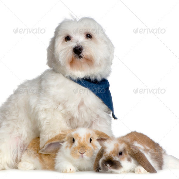 Dog and lop rabbits - Stock Photo - Images