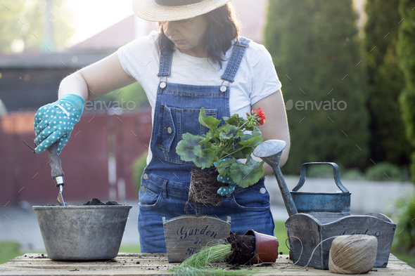 Gardener woman in gloves planting flowers. Gardening and floriculture. - Stock Photo - Images