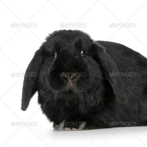 black Rabbit - Stock Photo - Images