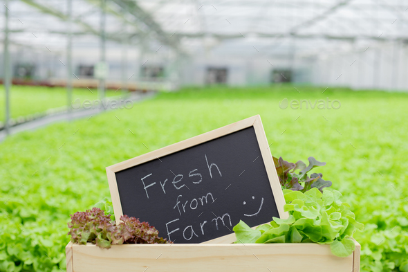Organic vegetables fresh from farm. - Stock Photo - Images