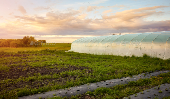 Eco farm at sunset. - Stock Photo - Images
