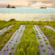Eco farm with polytunnel and patches covered with plastic mulch at sunset. - PhotoDune Item for Sale
