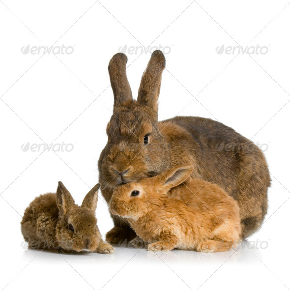 Mother Rabbit - Stock Photo - Images
