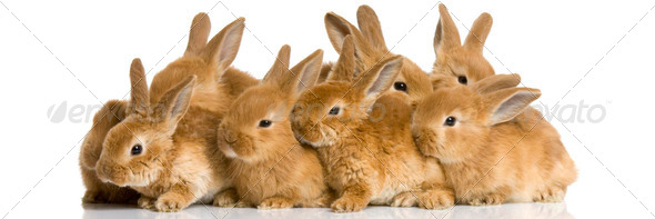 group of bunnies - Stock Photo - Images