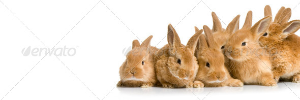 Scared group of bunnies - Stock Photo - Images