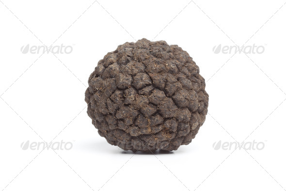 Whole single fresh winter trufflle mushroom - Stock Photo - Images