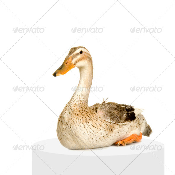 In Front Of A White Background - Stock Photo - Images