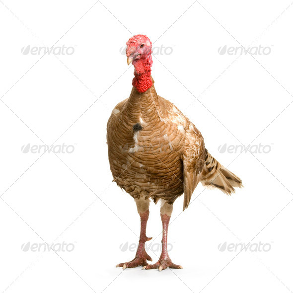 Turkey - Stock Photo - Images