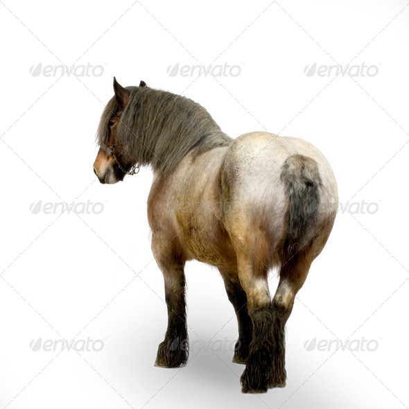 Carthorse - Stock Photo - Images
