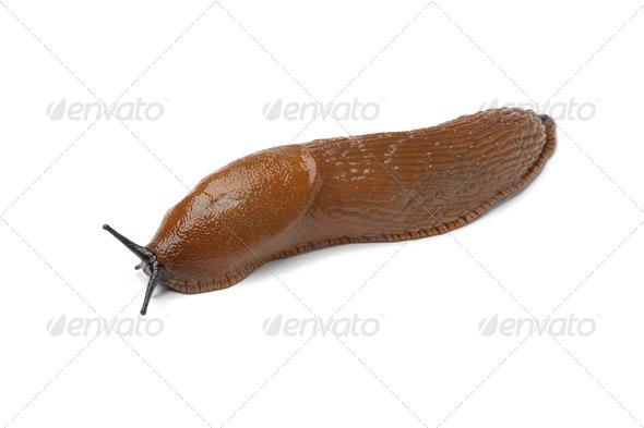 Single slug - Stock Photo - Images