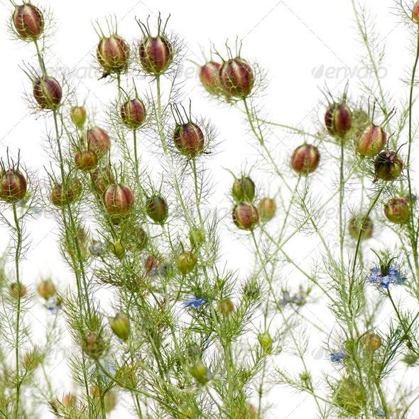 Wild plant - Stock Photo - Images