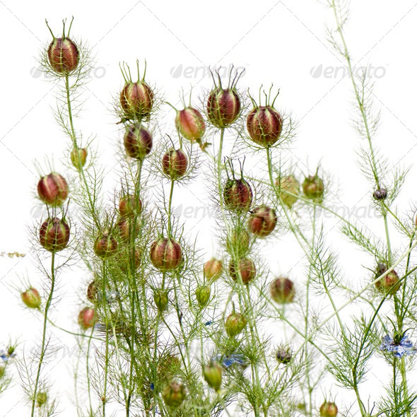 Wild plant - Stock Photo - Images