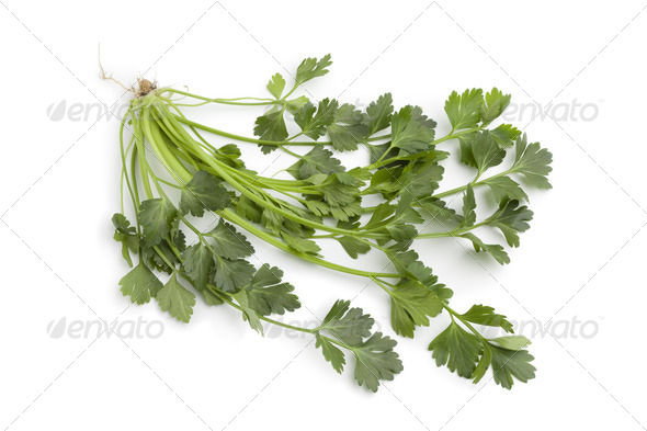 Fresh celery leaves - Stock Photo - Images