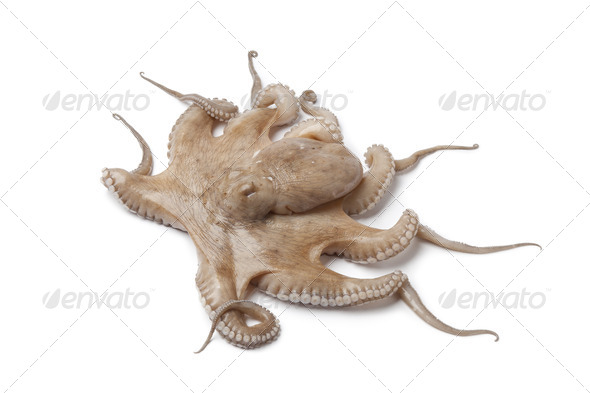 Whole single fresh raw octopus - Stock Photo - Images