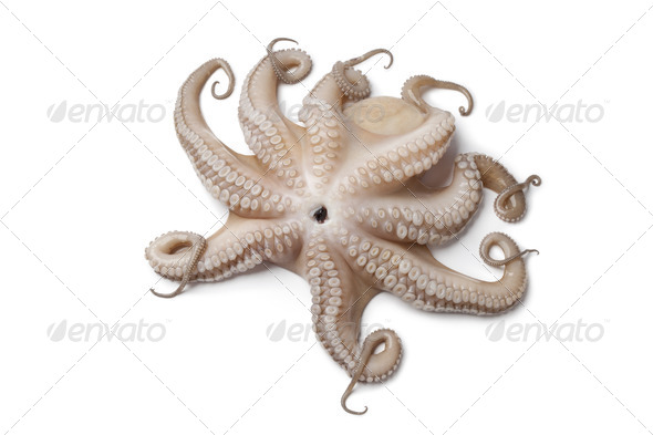 Whole single fresh raw octopus up side down - Stock Photo - Images