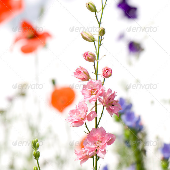 Wild flowers - Stock Photo - Images