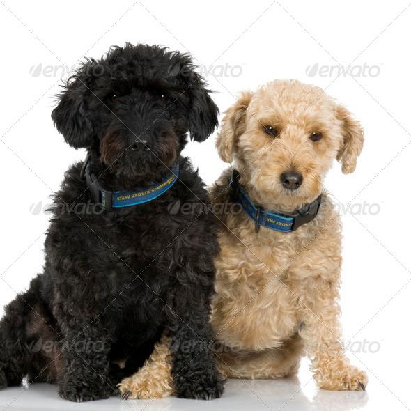 couple of Bastards - Stock Photo - Images