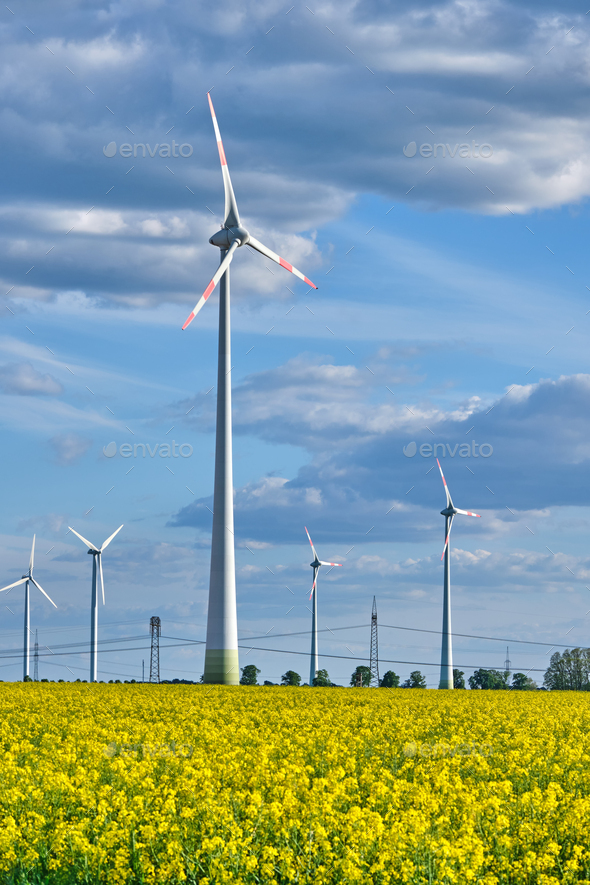 Wind turbines in a flowering canola field - Stock Photo - Images