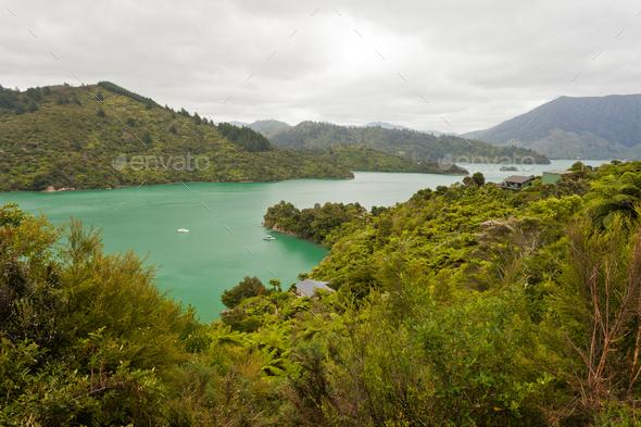 Kenepuru Sound of Marlborough Sounds, New Zealand - Stock Photo - Images