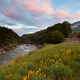 Sunset in Cobb valley of Kahurangi NP, New Zealand - PhotoDune Item for Sale