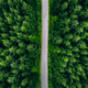 Aerial top view of road in green fir woods. Green forest with country road in Finland. - PhotoDune Item for Sale