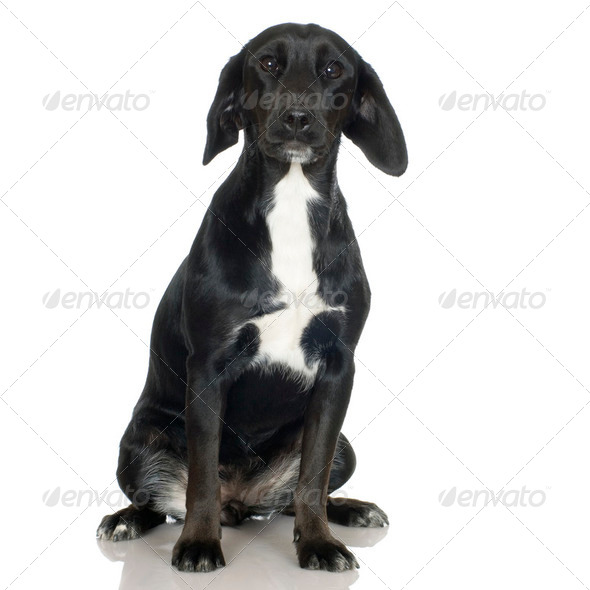 Bastard ( 1 years ) - Stock Photo - Images