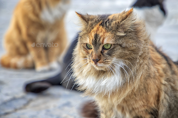 angry fluffy cat - Stock Photo - Images