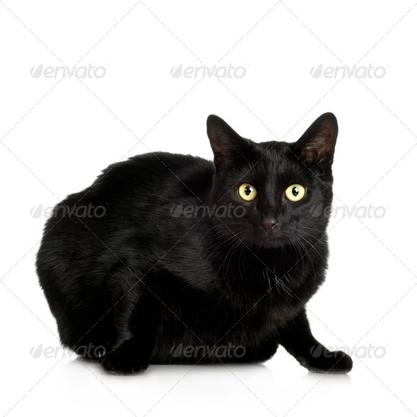 black Cat ( 4 years ) - Stock Photo - Images