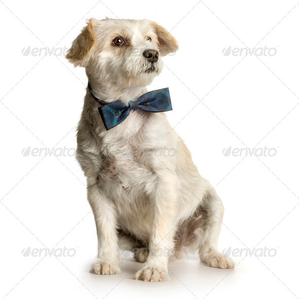 old dirty Bastard ( 10 years ) - Stock Photo - Images