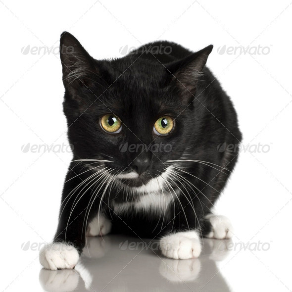 black Cat ( 10 months ) - Stock Photo - Images