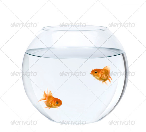 Two goldfish swimming in fish bowl in front of white background, studio shot - Stock Photo - Images