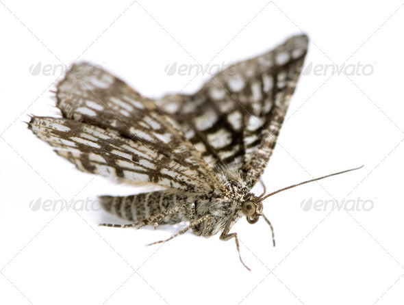 Moth - Stock Photo - Images