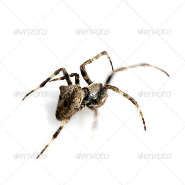 Spider running - Stock Photo - Images