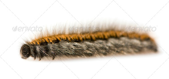 Caterpillar - Stock Photo - Images