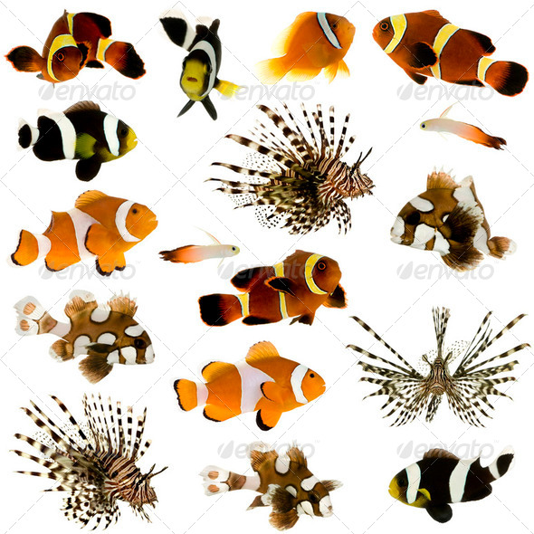 Collection of 17 tropical fish - Stock Photo - Images