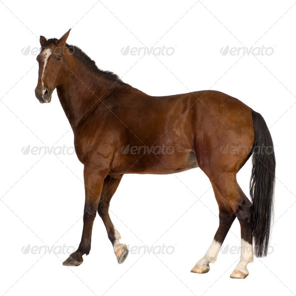 Horse - Stock Photo - Images
