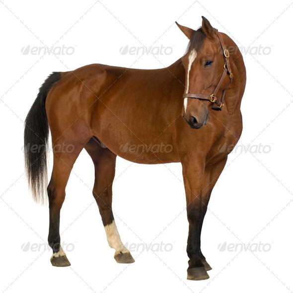 Horse - Stock Photo - Images