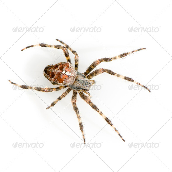 Spider - Stock Photo - Images