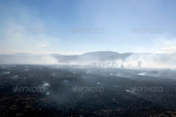 Fire at Masai mara Kenya - Stock Photo - Images