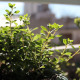 Aromatic Plant Balcony Garden - VideoHive Item for Sale