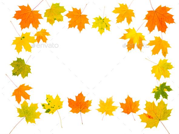 Maple autumn leaves frame on isolated white background - Stock Photo - Images