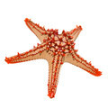 Red-knobbed starfish - PhotoDune Item for Sale