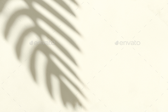 Silhouette of the shadow of a crooked branch - Stock Photo - Images