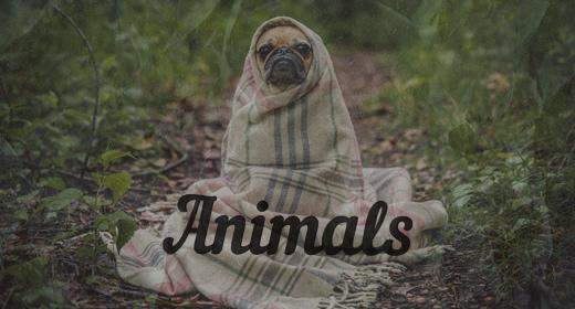 Animals by SoundRec