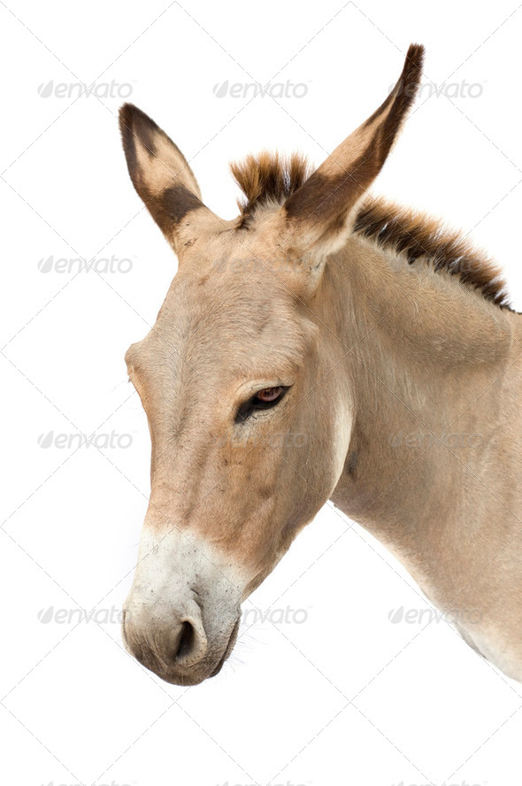 donkey - Stock Photo - Images