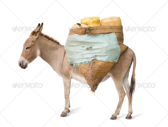 donkey carrying supplies - Stock Photo - Images