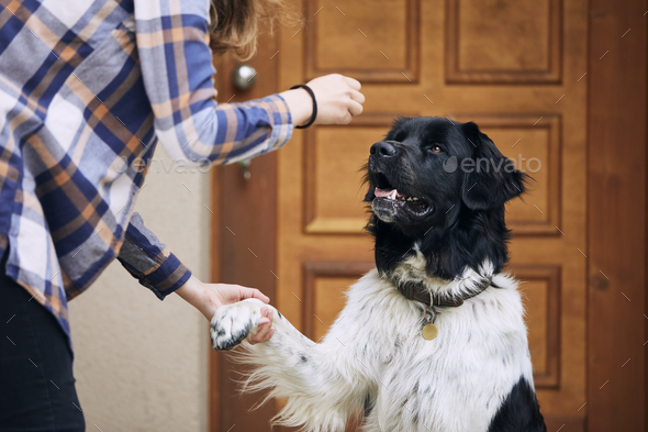 Dog giving paw her pet owner - Stock Photo - Images
