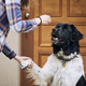 Dog giving paw her pet owner - PhotoDune Item for Sale