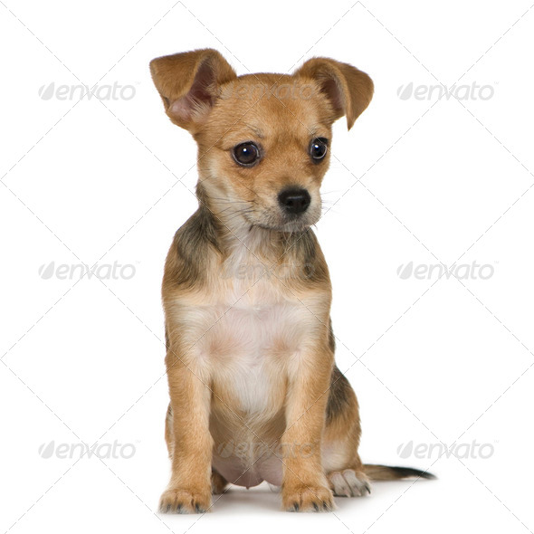 Bastard (3 months) - Stock Photo - Images